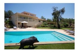 Just , Rentals in  - Villa Camelia
